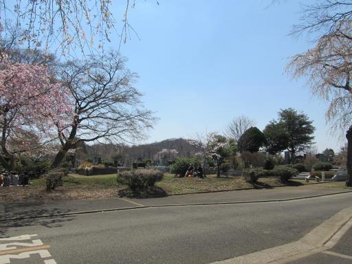 20120408・多磨霊園09