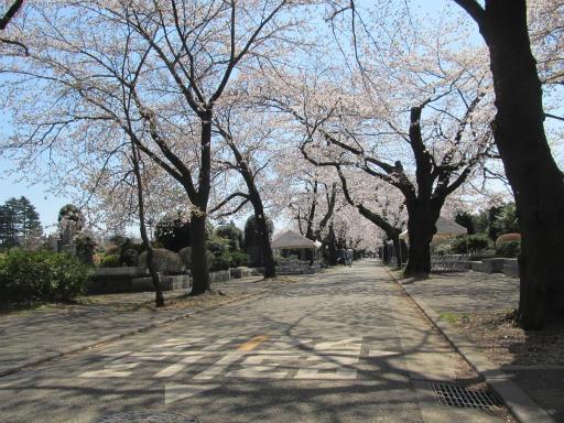 20120408・多磨霊園15