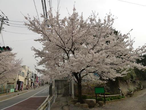 20120410・近所の桜1-02