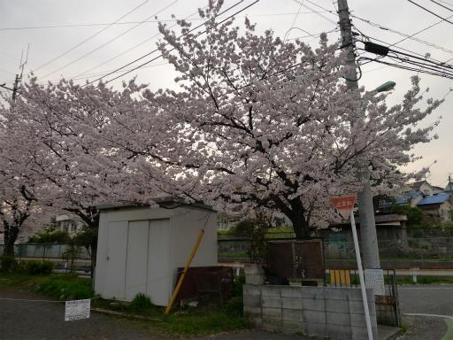 20120410・近所の桜3-09