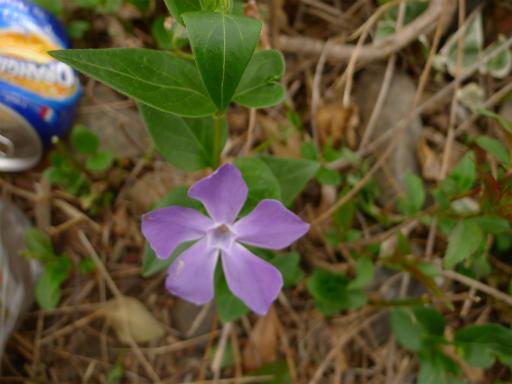 20120410・近所の桜3-07