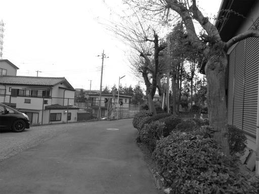 20120410・近所の桜3-17