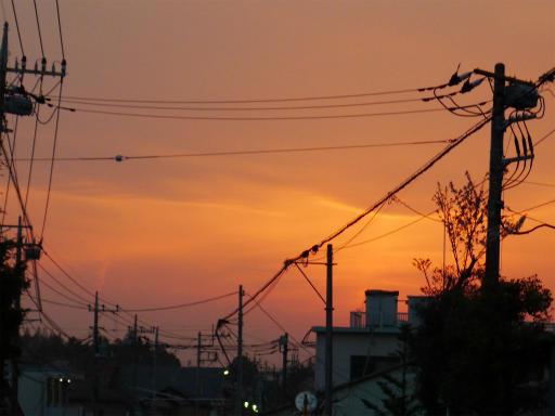 20120410・近所の桜3-20