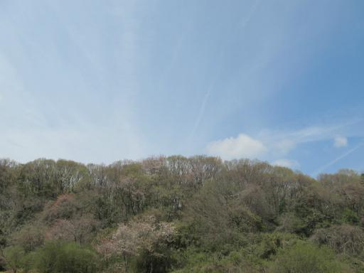 20120415・緑の森・空01