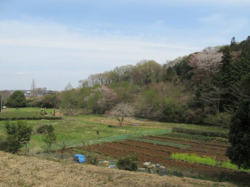 20120415・緑の森・空10