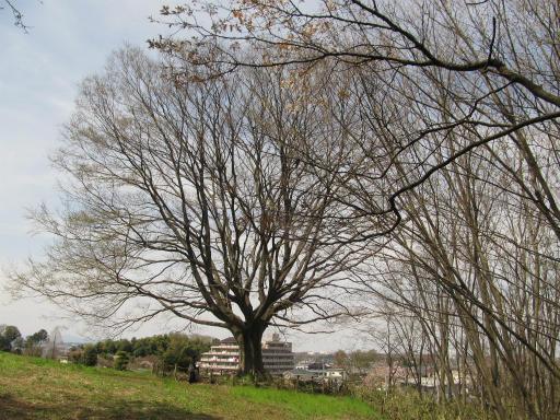 20120415・緑の森2-22