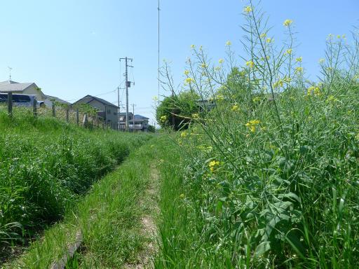 20120505・安比奈線散歩2-16