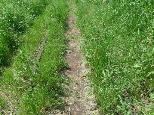 20120505・安比奈線散歩2-14