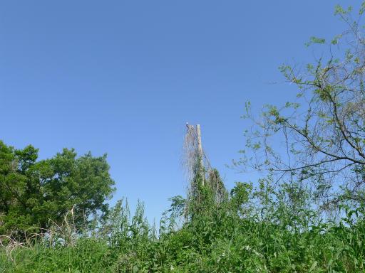 20120505・安比奈線散歩4-25