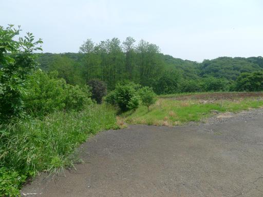 20120526・中氷川散歩24