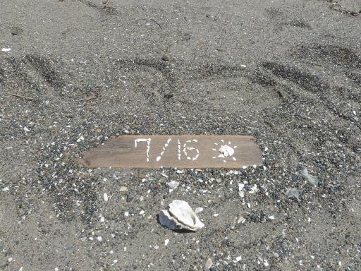20120716・葛西海浜公園3-23