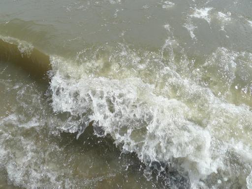 20120716・葛西海浜公園4-15