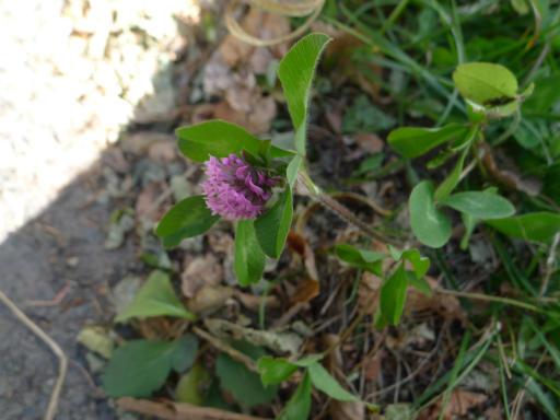 20121023・植物4・白樺峠