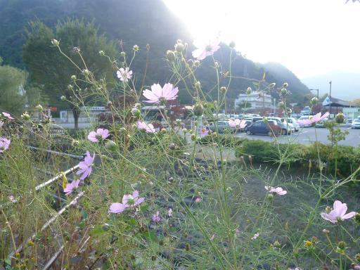 20121023・植物1・横川