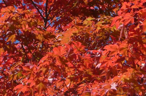 20121023・植物8・平湯大滝