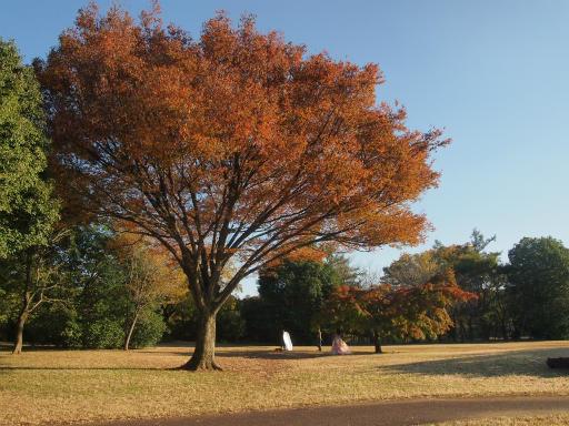 20141115・狭山湖16