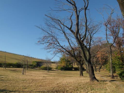 20141115・狭山湖14