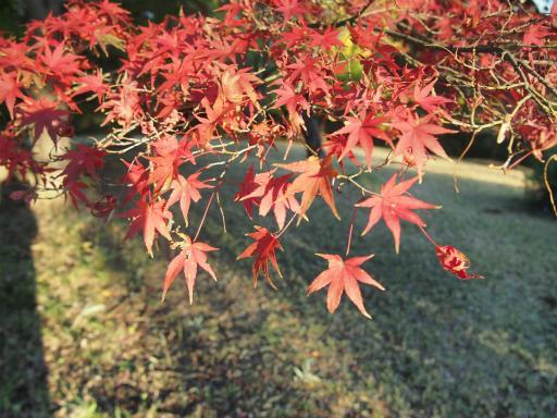 20141115・狭山湖23