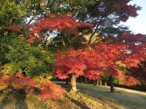 20141115・狭山湖22
