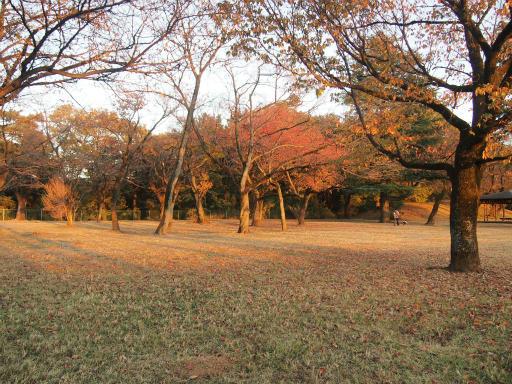 20141115・狭山湖の空09