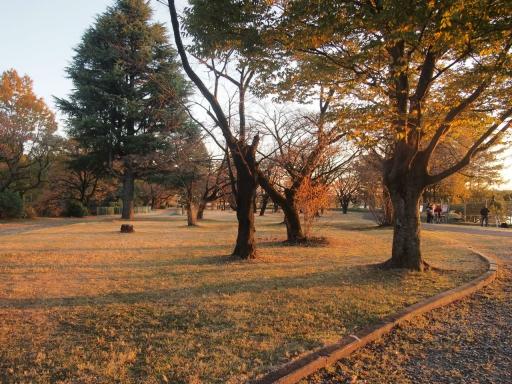 20141115・狭山湖空大04