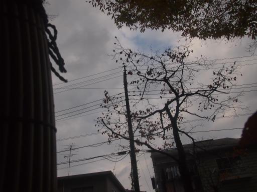 20141130・荒幡富士散歩空06・イノシシ目線