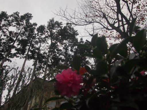 20141130・荒幡富士散歩空02