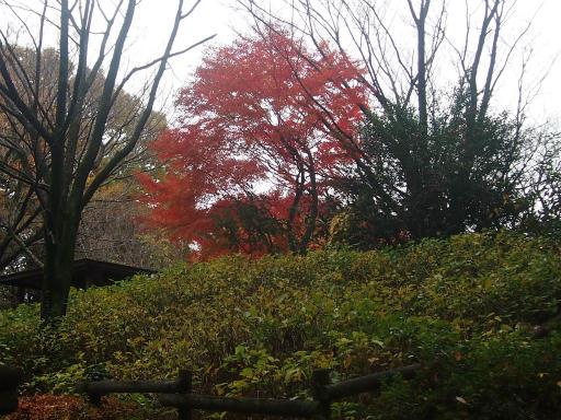 20141130・荒幡富士の紅葉3