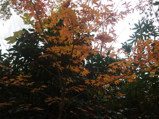 20141130・荒幡富士の紅葉4