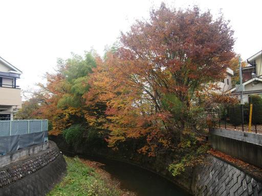 20141130・荒幡富士の紅葉1