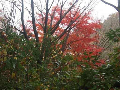 20141130・荒幡富士の紅葉5