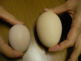 双子卵 (3)