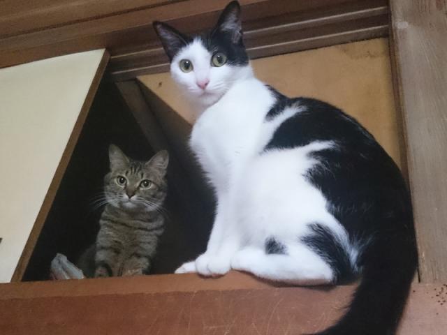 猫たち03