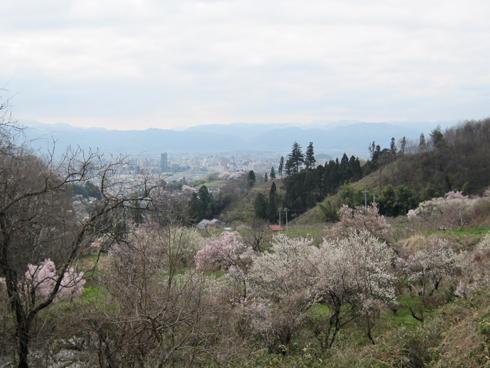 花見山2012-8