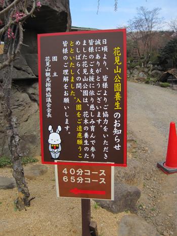 花見山2012-6