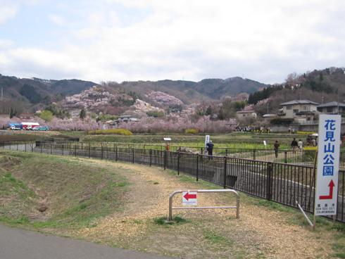花見山2012-1
