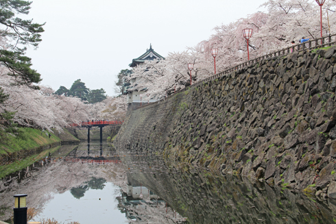 弘前桜2012-14