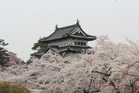 弘前桜2012-12