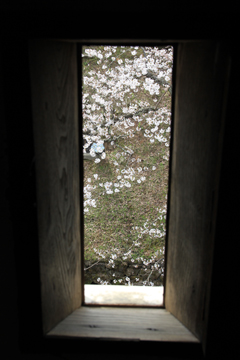 弘前桜2012-11