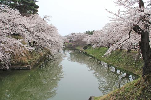 弘前桜2012-5
