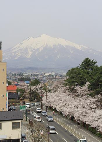 弘前桜2012-4