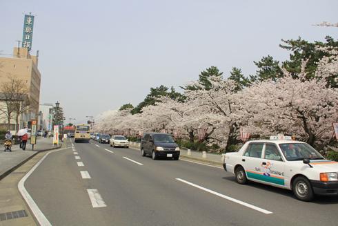 弘前桜2012-1