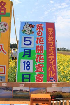 菜の花フェスタ-3