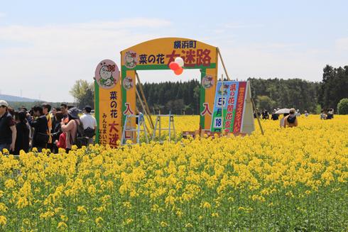 菜の花フェスタ-1