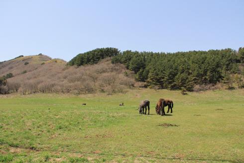 尻屋崎の寒立馬2012-6