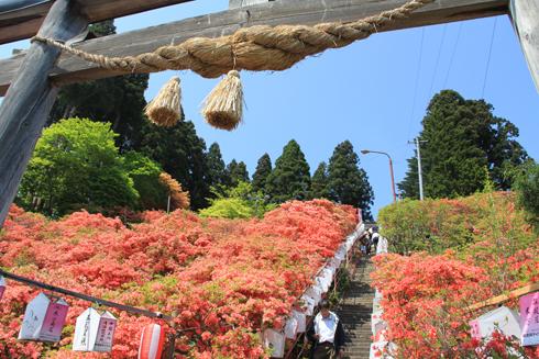 天王神社つつじ祭り-3