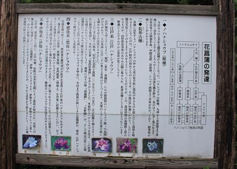 鯉艸郷-3