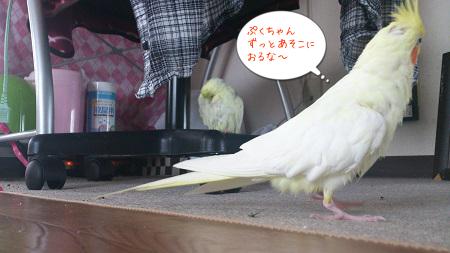 ぷくちゃん(^^ゞ
