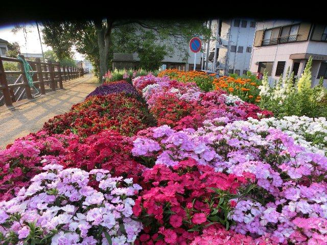 自転車道の花壇