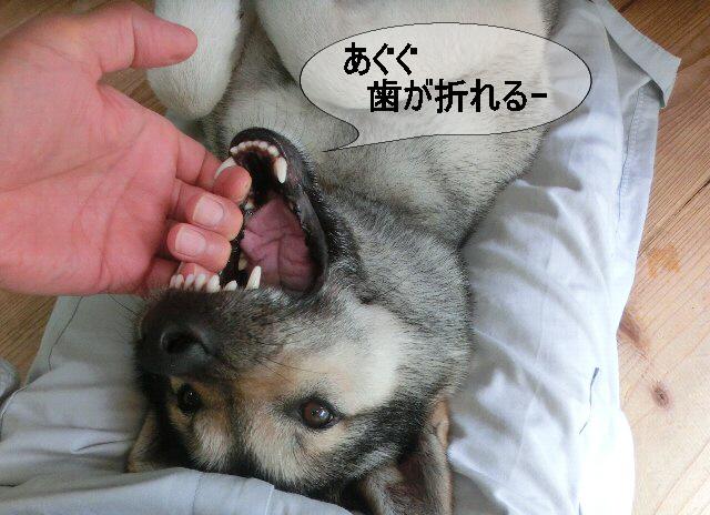 編集_犬歯に掛けて